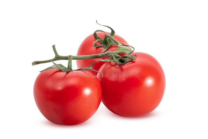 gałąź pomidory trzy obrazy royalty free