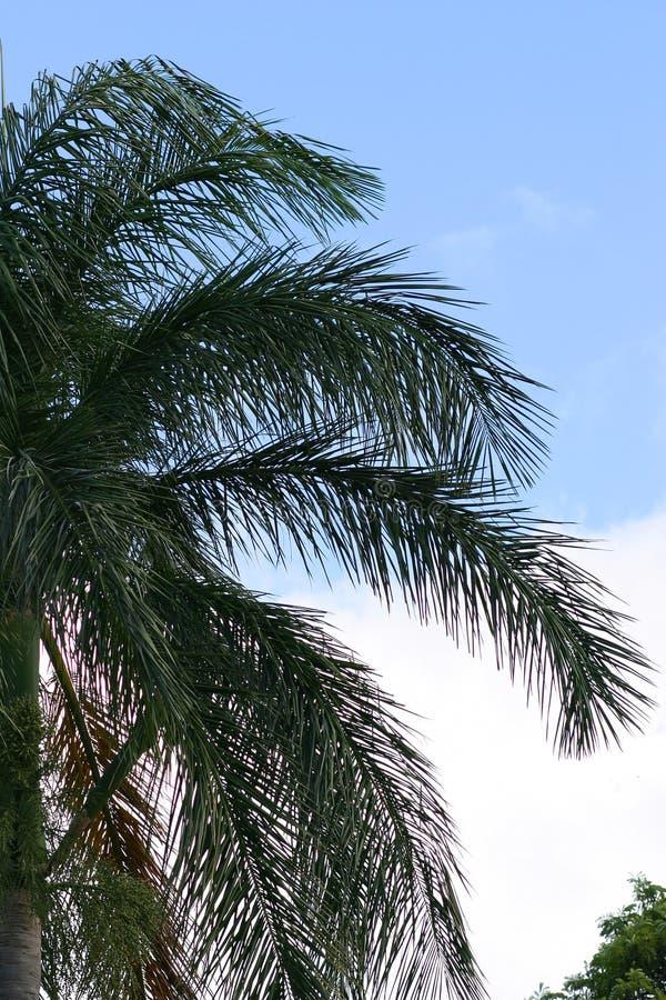 gałąź przeciwko nieba jaskrawemu palmowemu drzewo obrazy stock