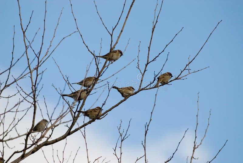 gałąź ptak fotografia stock