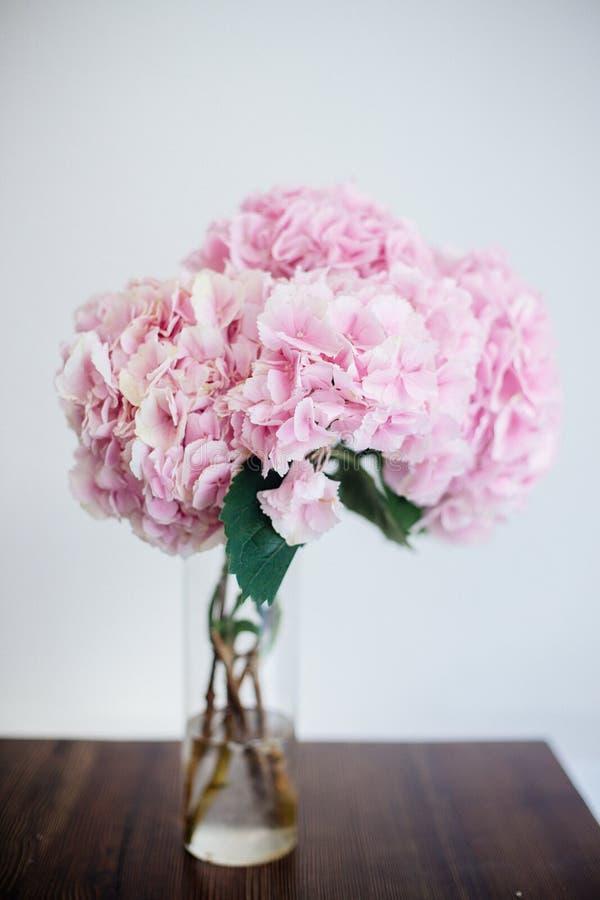 Gałąź różowa hortensja obrazy stock