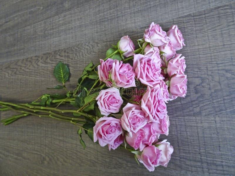 Gałąź różowe róże na tle ciemny drewno zdjęcie stock
