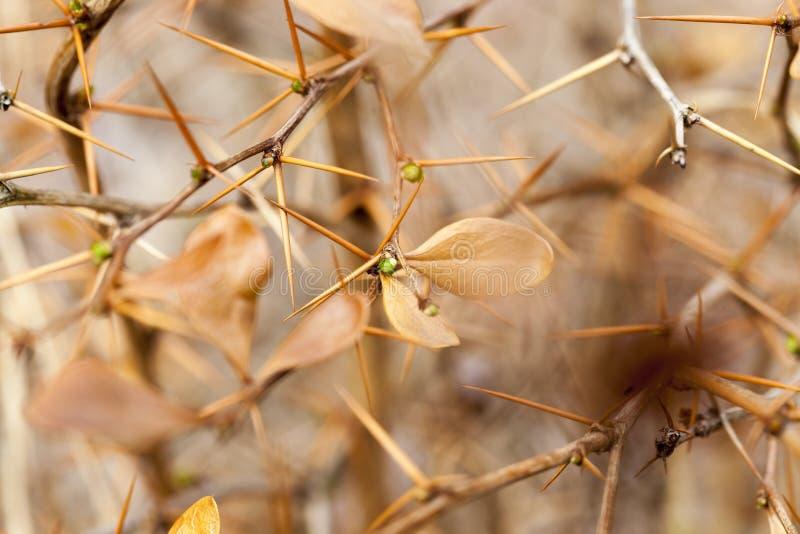 Gałąź roślina obraz royalty free