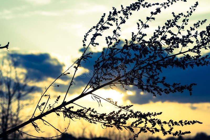 Gałąź rośliny na zmierzchu tle fotografia stock