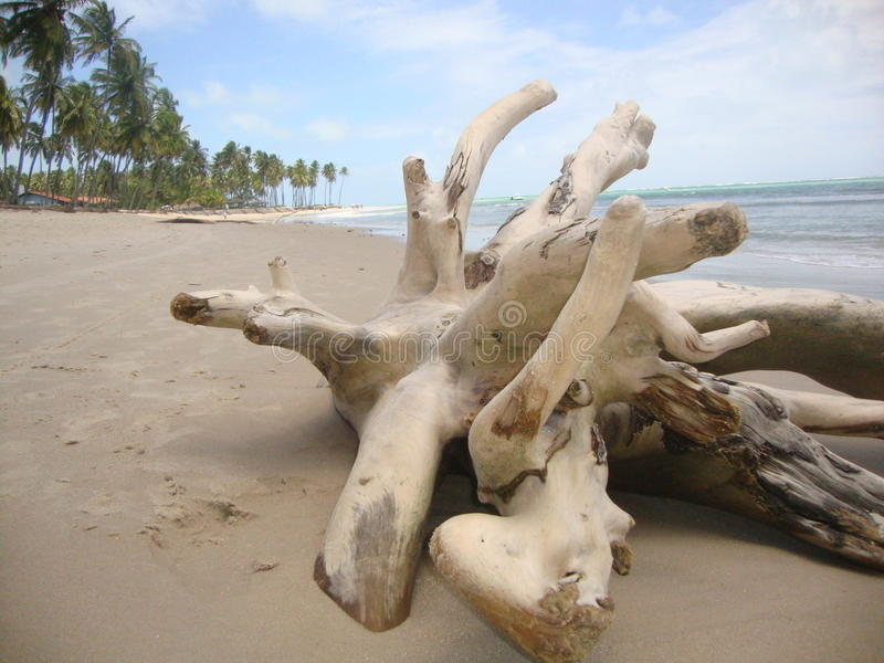 Gałąź rzucająca na piasku obrazy royalty free