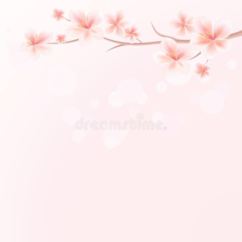 Gałąź Sakura z kwiatami na Różowym bokeh tle Jabłoniowi kwiaty Czereśniowy okwitnięcie Wektoru EPS 10 cmyk royalty ilustracja
