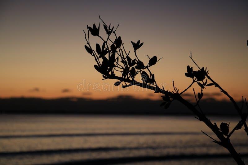 Gałąź Sylwetkowa Z zmierzchu oceanem BG zdjęcie royalty free