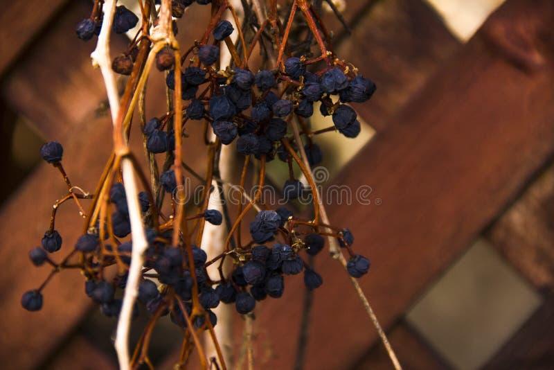 Gałąź winogrona entwine drewnianą altanę Altany dekoracja zdjęcie stock