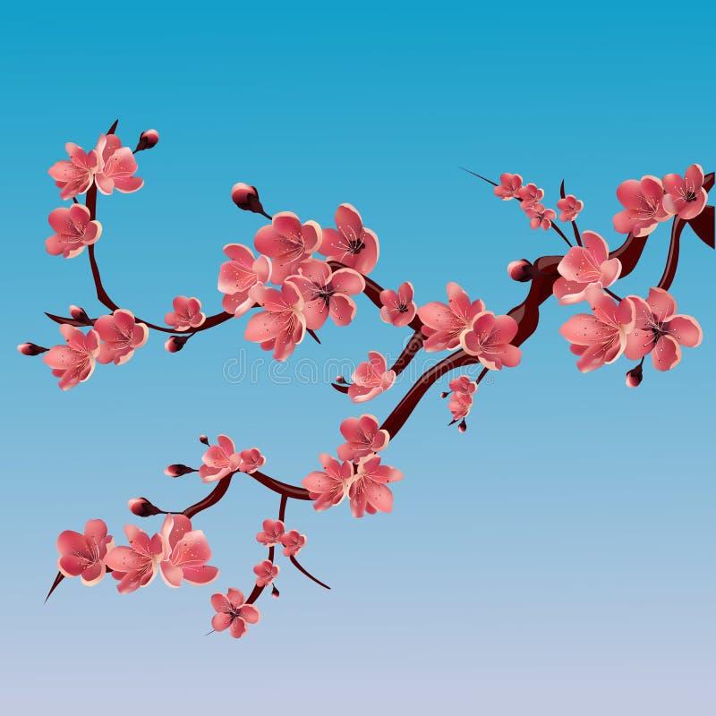 Gałąź wzrastał kwitnący Sakura sakura czereśniowy japoński drzewo Wektor odosobniona ilustracja royalty ilustracja