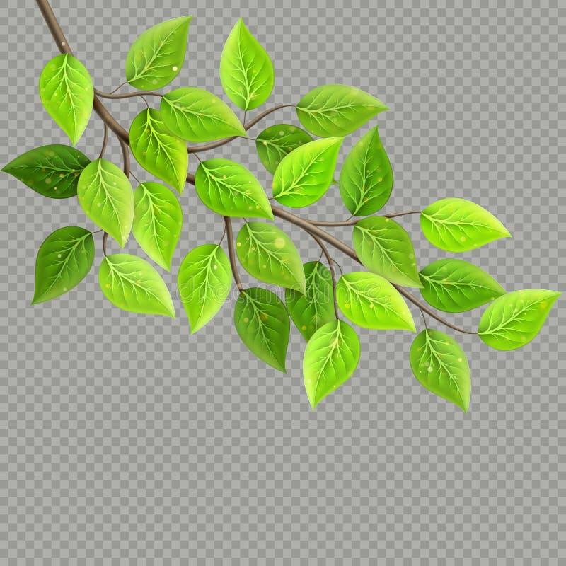 Gałąź z świeżymi zieleń liśćmi odizolowywającymi pojęcia eco pokoju gołębie 10 eps royalty ilustracja