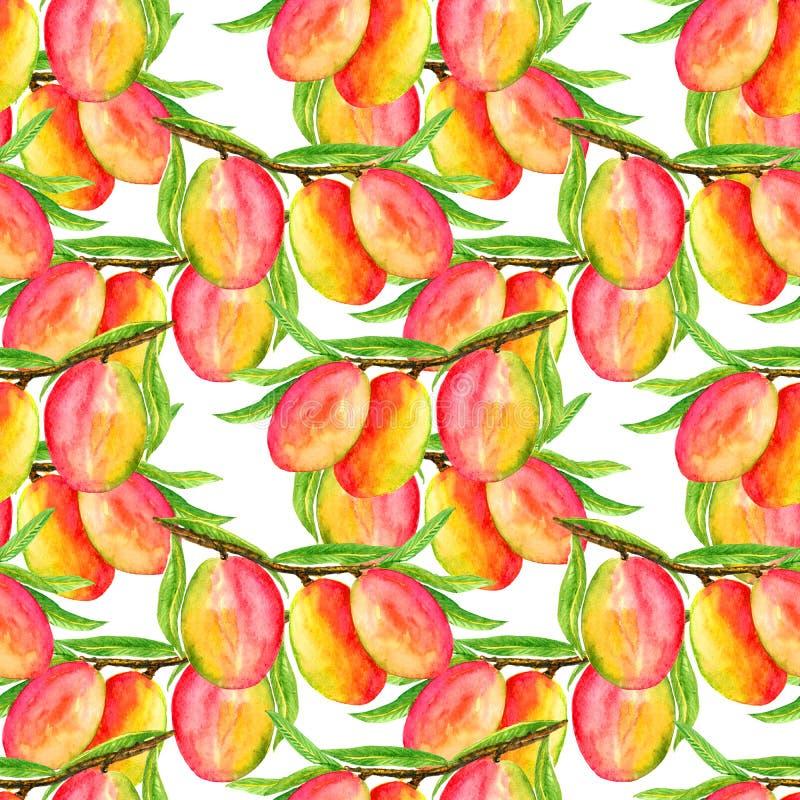 Gałąź z dojrzałymi mangowymi owoc i liśćmi na miękkim białym tle royalty ilustracja