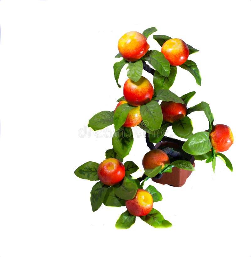 Gałąź z jabłkami obraz stock
