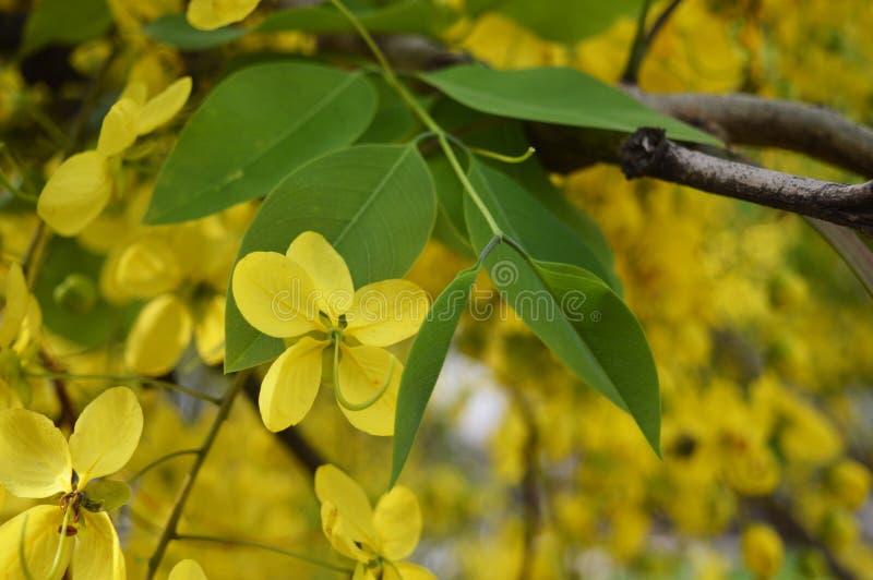 Gałąź z liśćmi i żółtym kwiatem fotografia royalty free