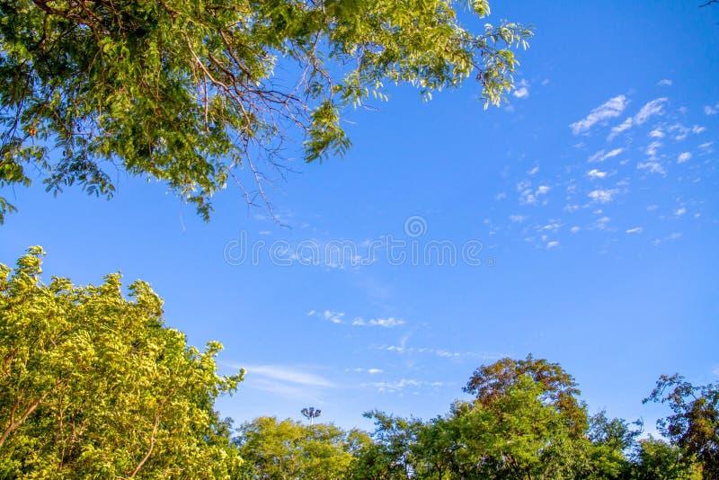 Gałąź z liśćmi przecina z niebieskim niebem obraz stock