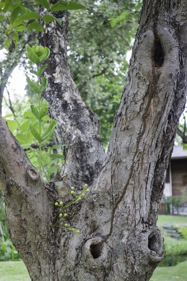 Gałąź z zieleń liśćmi w lecie zdjęcie royalty free