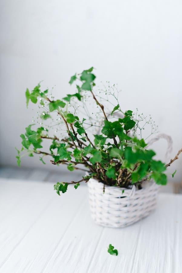 Gałąź z zielonymi liśćmi w koszu na drewnianym tle fotografia royalty free