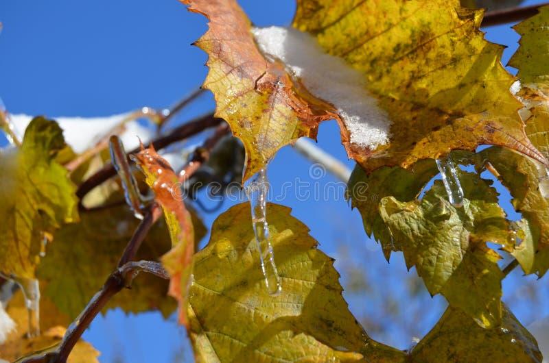 Gałąź zakrywają z lodem fotografia royalty free