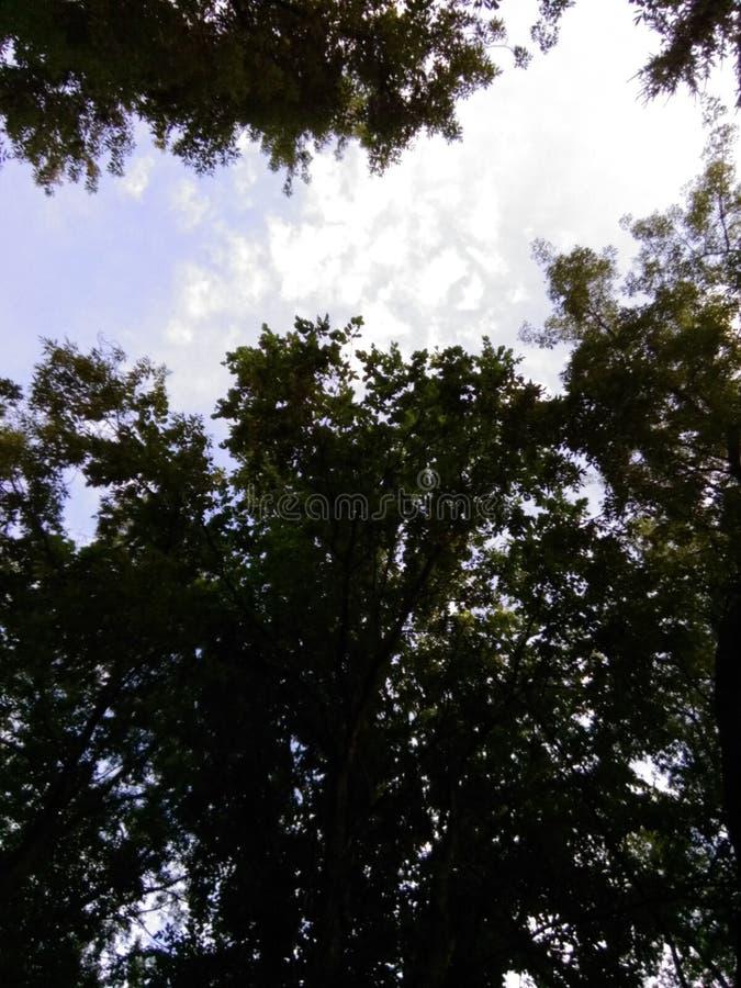 gałąź zielenieją lato brzeg rzeki nieba lato obraz stock