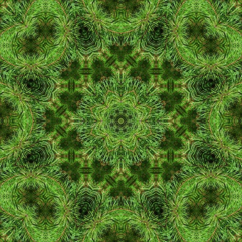 Gałąź zielona puszysta sosna zdjęcie royalty free