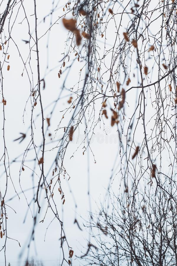 Gałązek gałąź zimy nieba ciszy zimny brown szary calmness obraz stock