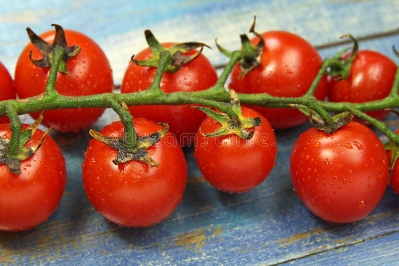 Gałązka świezi soczyści pomidory, selekcyjna ostrość zdjęcie royalty free
