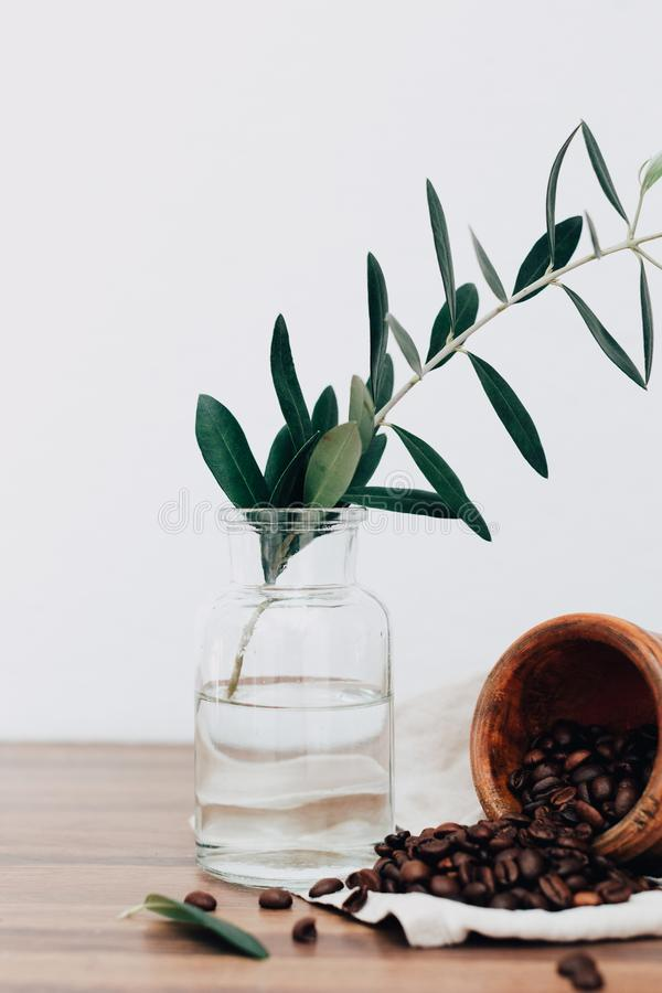 Gałązka oliwna na wazie z kawowymi beens obrazy royalty free