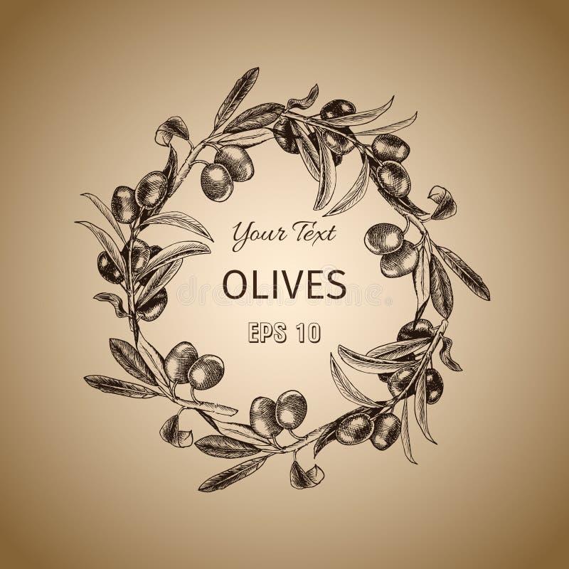 Gałązka oliwna wianek Rocznika karciany projekt z ręka rysującym drzewa oliwnego nakreśleniem Wektorowa botaniczna ilustracja royalty ilustracja