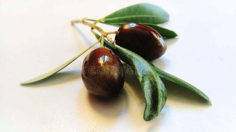 Gałązka oliwna z czarnymi owoc zdjęcie stock