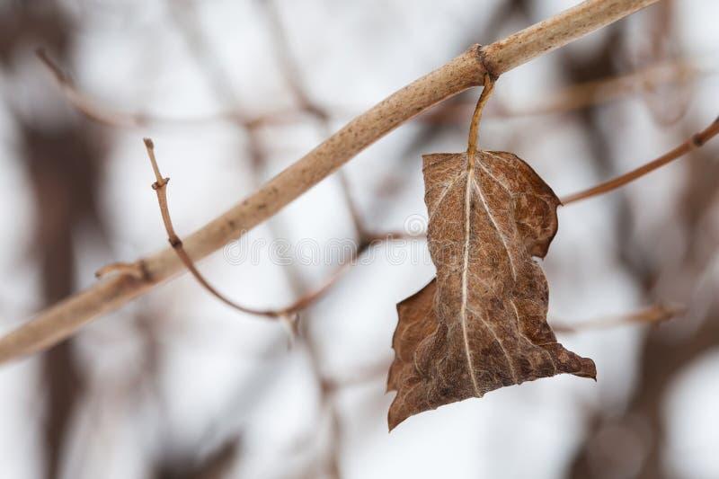 Gałązka z wysuszonym liściem Jesieni natury krajobraz obraz royalty free