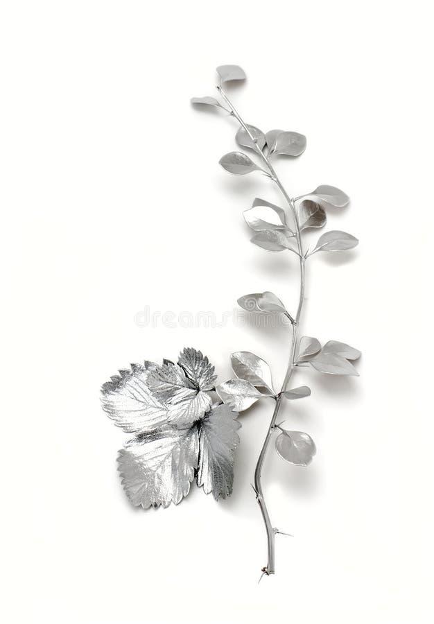 Gałązki berberys pospolity liść i truskawki zdjęcia royalty free