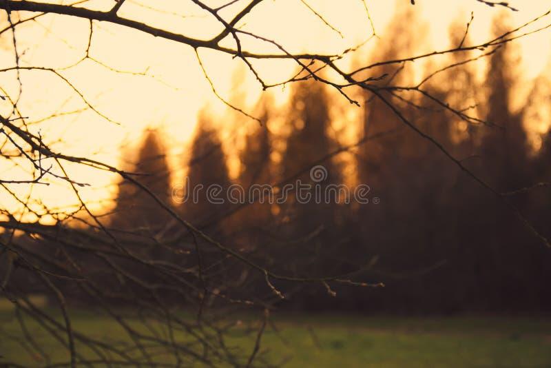 Gałązki i lasowa krawędź zdjęcia stock