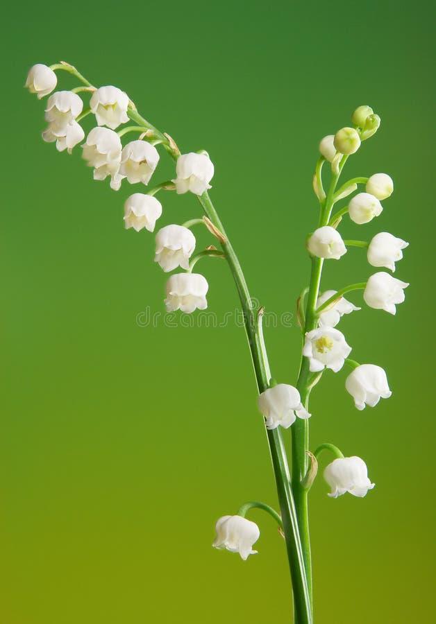 gałązki lilii fotografia stock