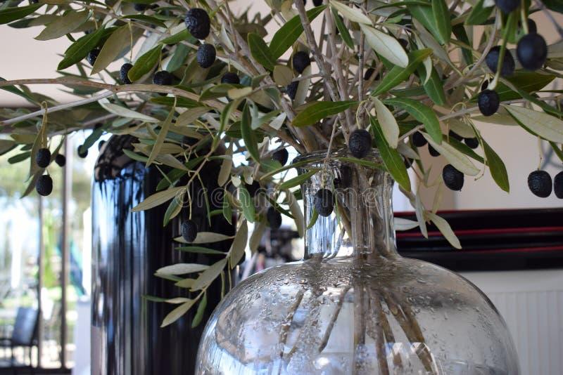 Gałązki oliwne w szklanej wazie zdjęcie royalty free