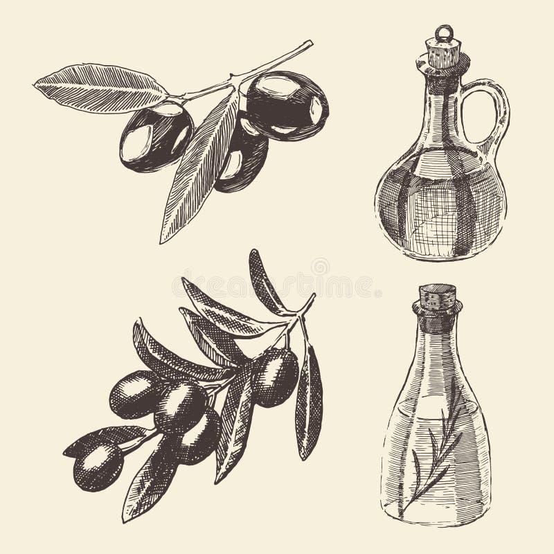 Gałązki Oliwnej butelki Ustalona ręka Rysujący wektor ilustracja wektor