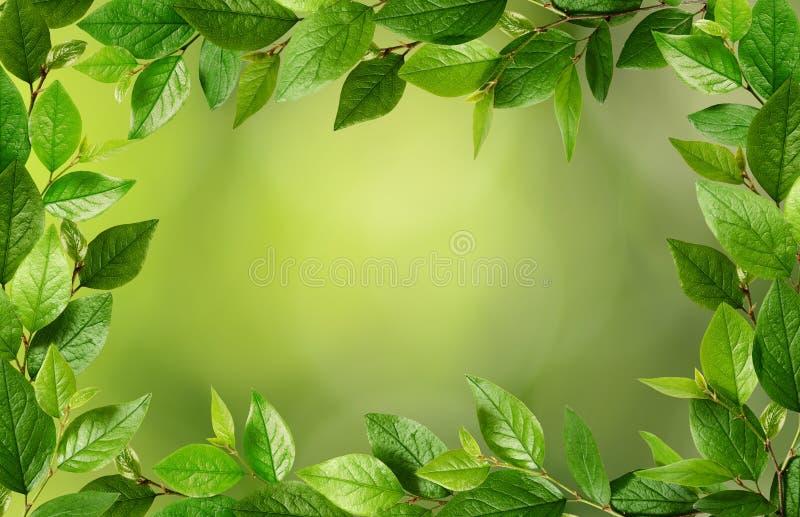 Gałązki z świeżymi zielonymi liśćmi w ramie obrazy stock