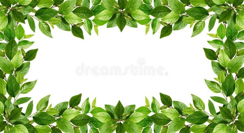 Gałązki z świeżymi zielonymi liśćmi w ramie ilustracja wektor