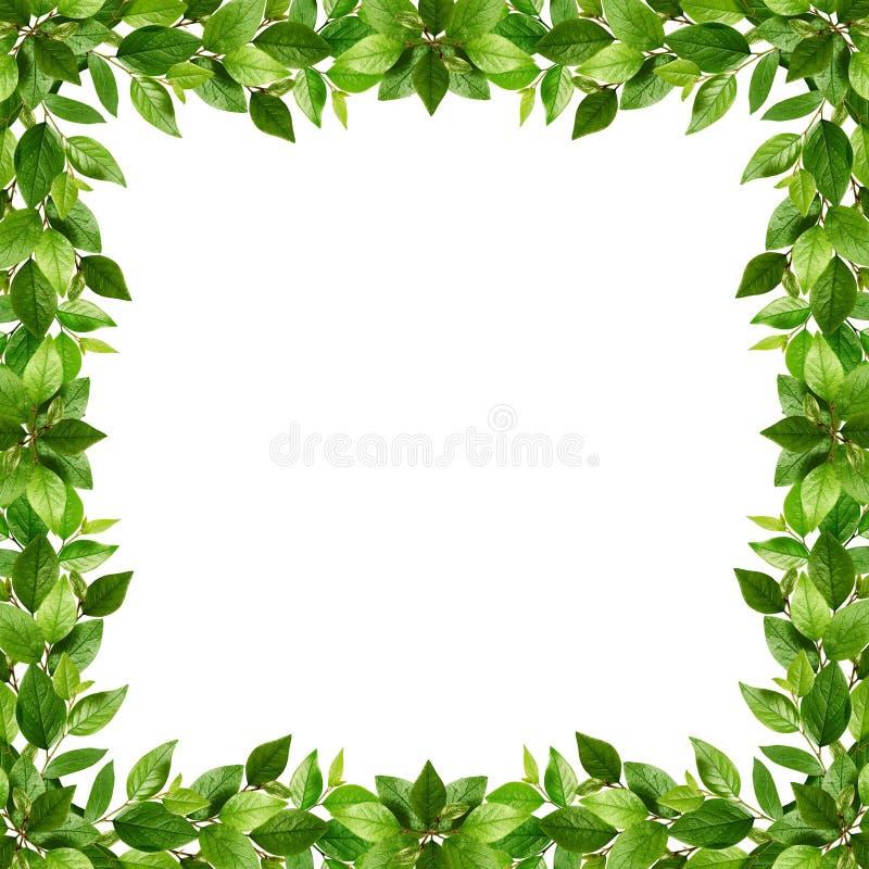 Gałązki z świeżymi zielonymi liśćmi w ramie ilustracji