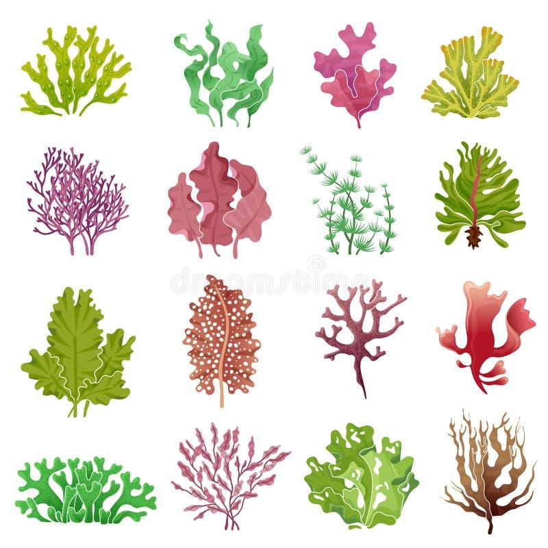 Gałęzatka set Denne rośliny, ocean algi i akwarium kelp, Podwodnego gałęzatka wektoru odosobniona kolekcja royalty ilustracja