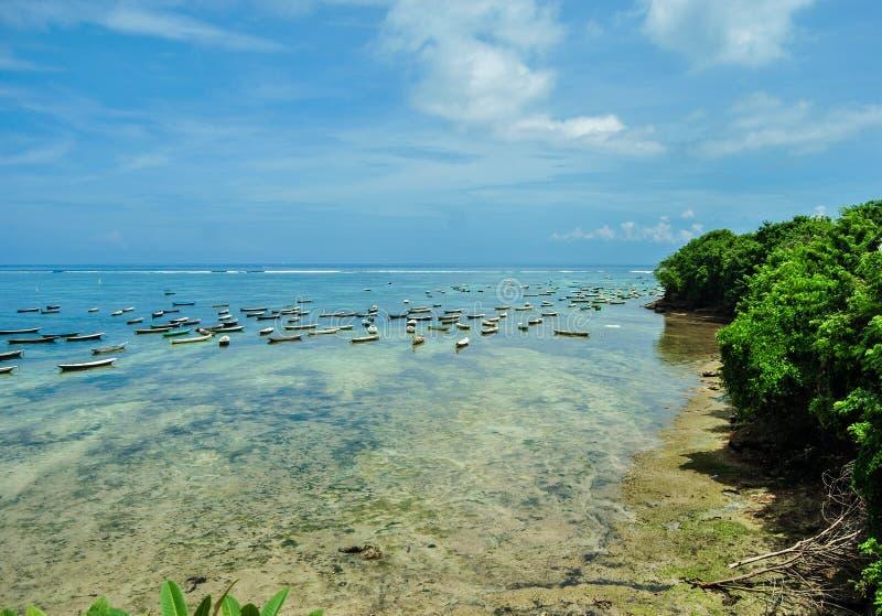 Gałęzatki roślina przy niskim przypływem na Nusa Lembongan wyspie zdjęcie stock
