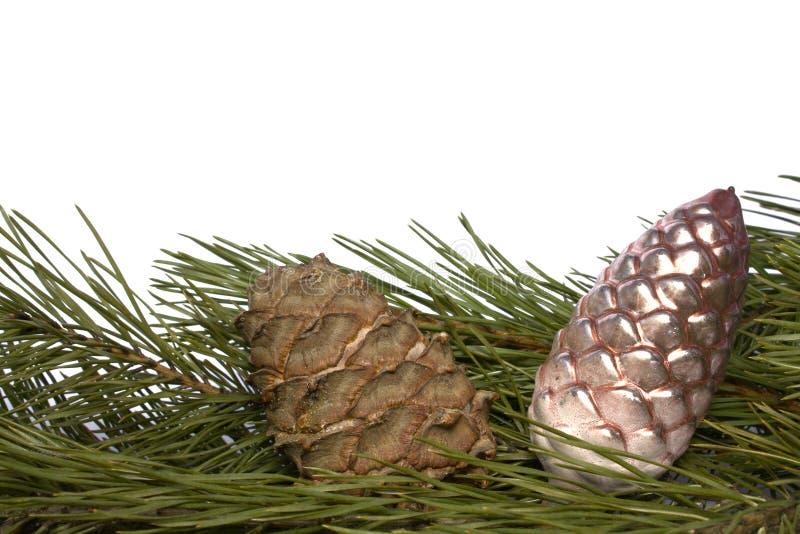 gałęziaści cedrowi boże narodzenie rożka ornamenty zdjęcia royalty free