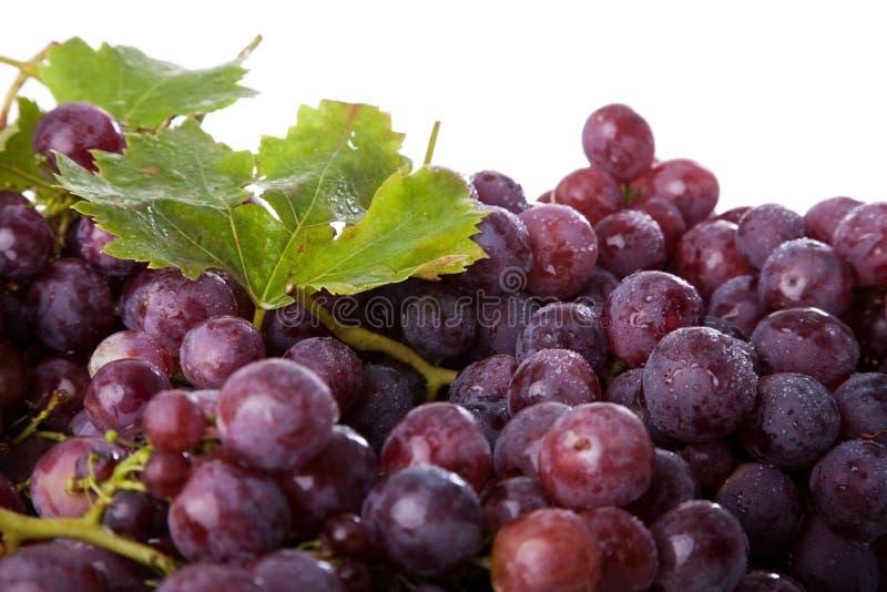gałęziaści winogrona zdjęcie royalty free