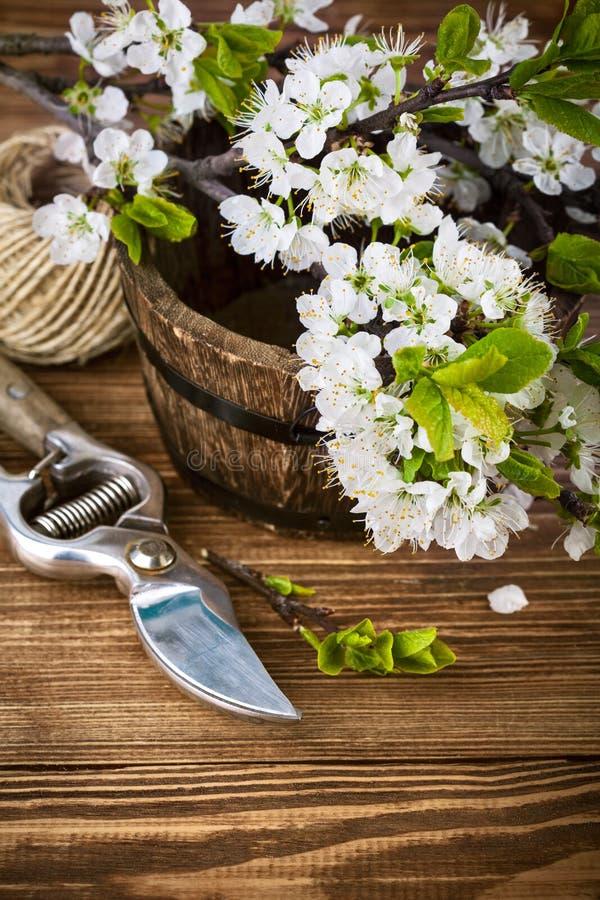 Download Gałęziasta Kwitnąca Drzewna śliwka Na Drewnianej Desce Zdjęcie Stock - Obraz złożonej z owoc, greenbacks: 53789588