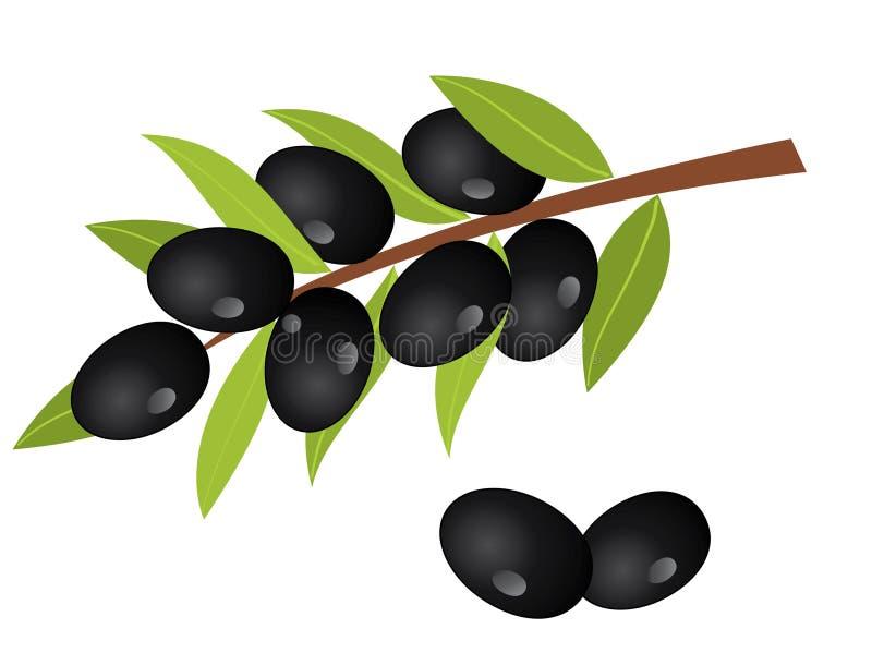 gałęziasta oliwka ilustracja wektor