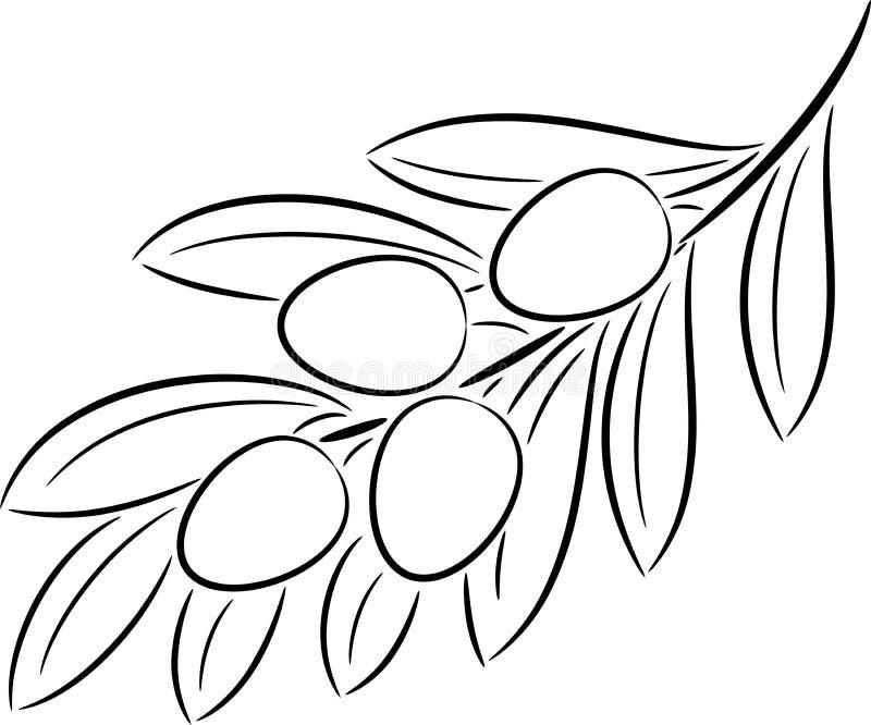gałęziasta oliwka ilustracji