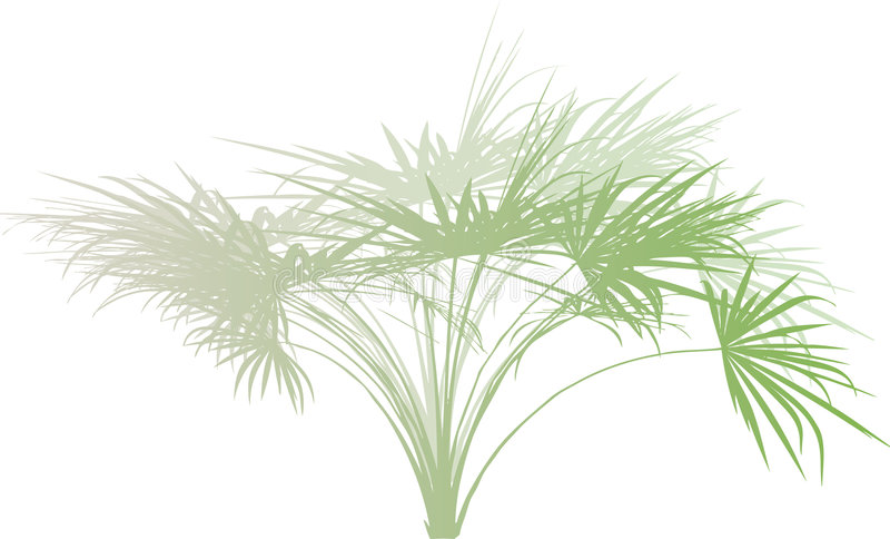 gałęziasta palma royalty ilustracja