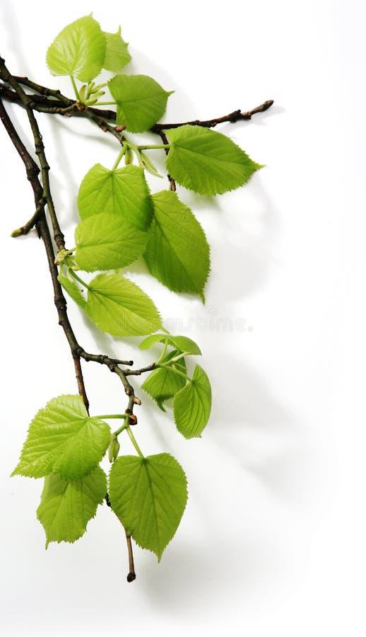 gałęziasta sztuki wiosna zdjęcie stock