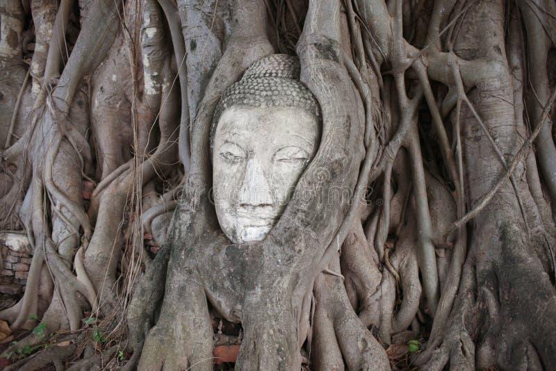 gałęziasty Buddha przewodzi daleko drzewa utted fotografia stock
