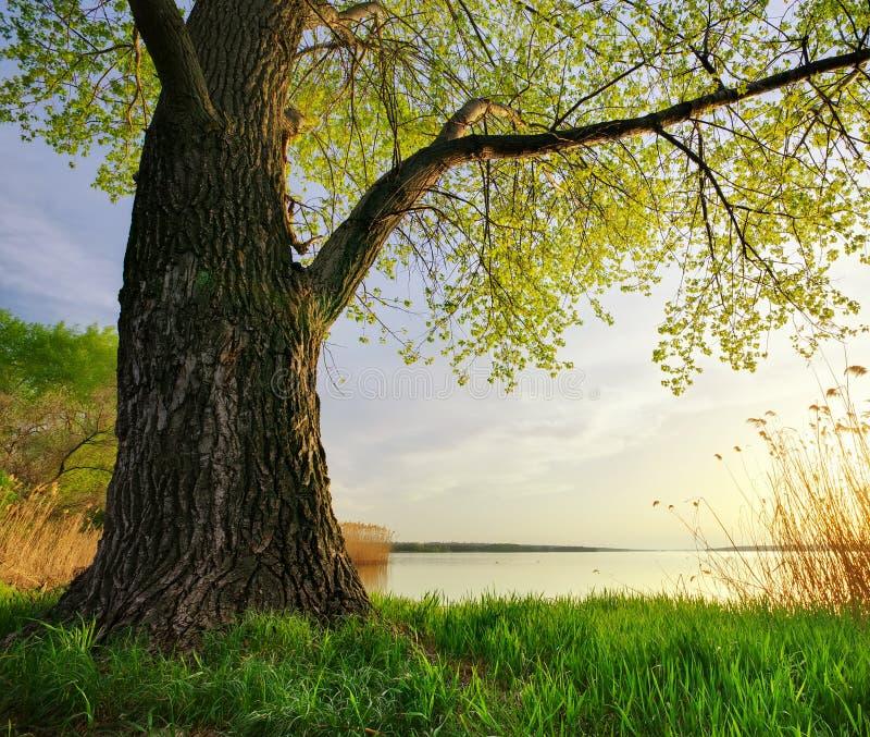 Download Gałęziasty Jaskrawy Kwiecenia Zieleni Natury Wiosna Drzewo Zdjęcie Stock - Obraz złożonej z wybrzeże, kolorowy: 57657996