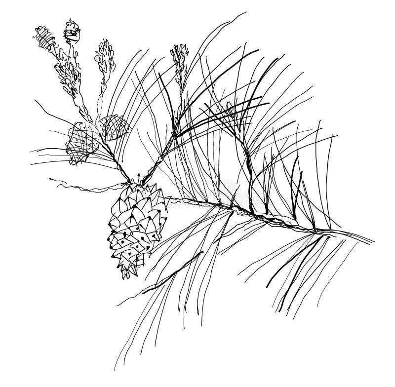 gałęziasty jedlinowy drzewo ilustracji