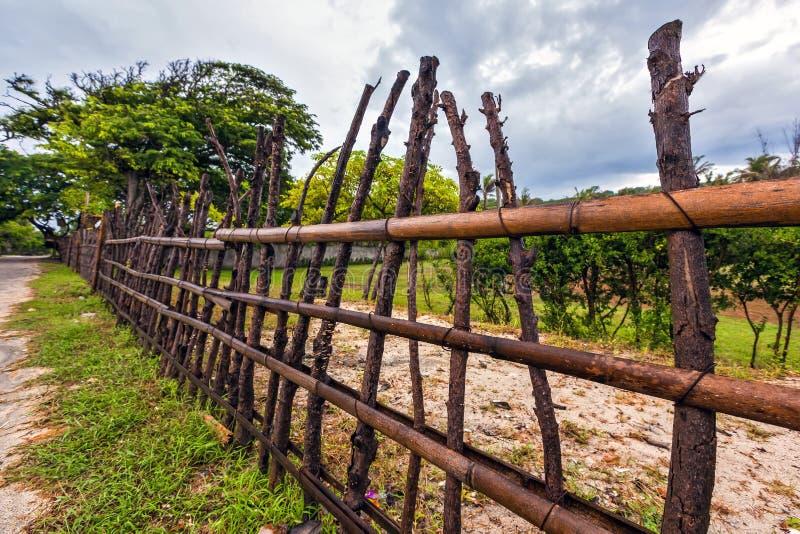 Gałęziasty płotowy zbliżenie, Gil Trawangan, Indonezja zdjęcia royalty free
