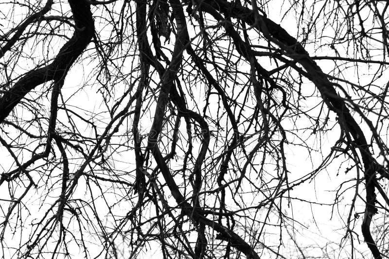 gałęzie drzewa monochromatycznego obraz stock